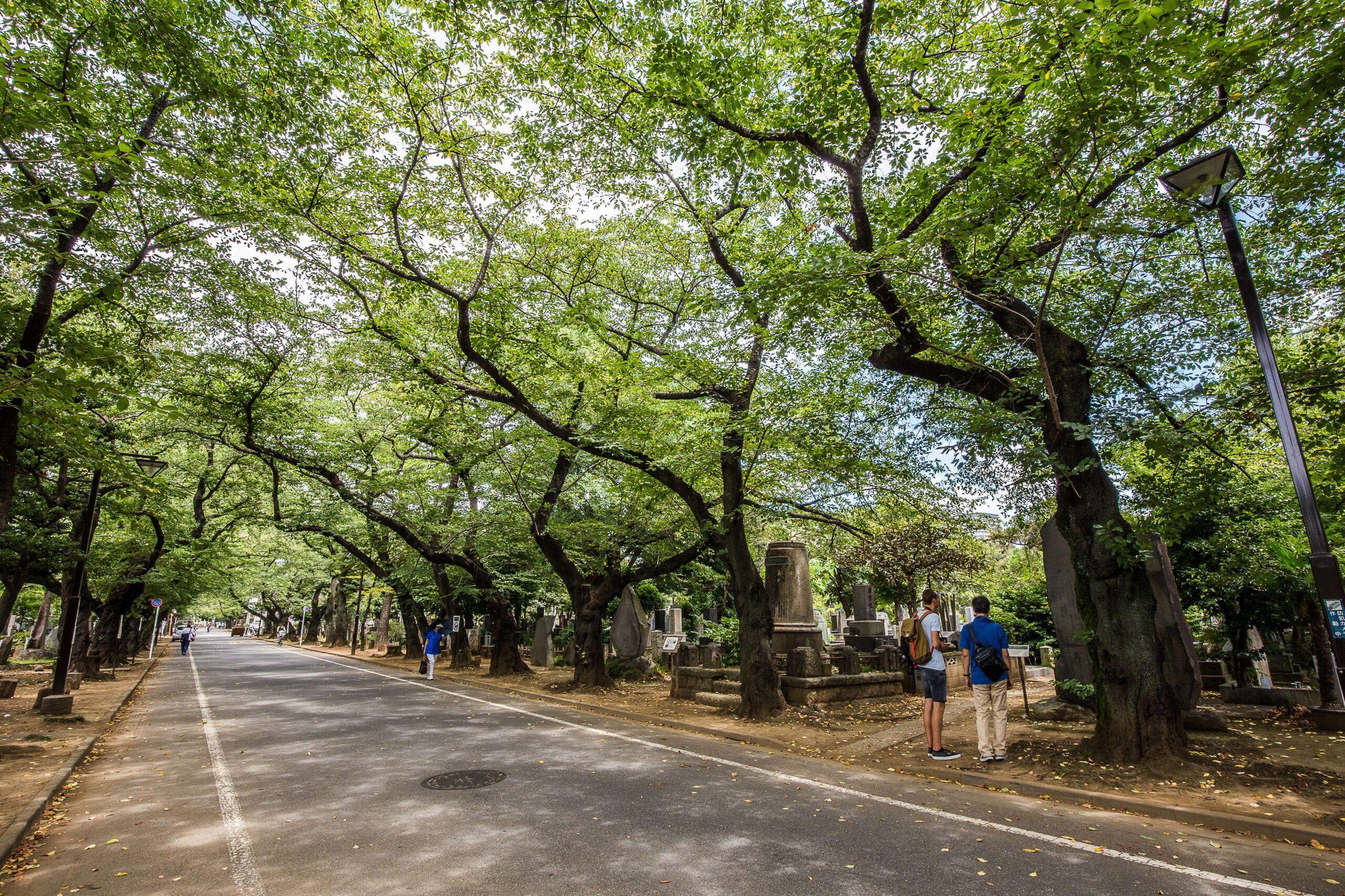 """В Японии набирают популярность экологичные """"могилы под деревьями"""""""