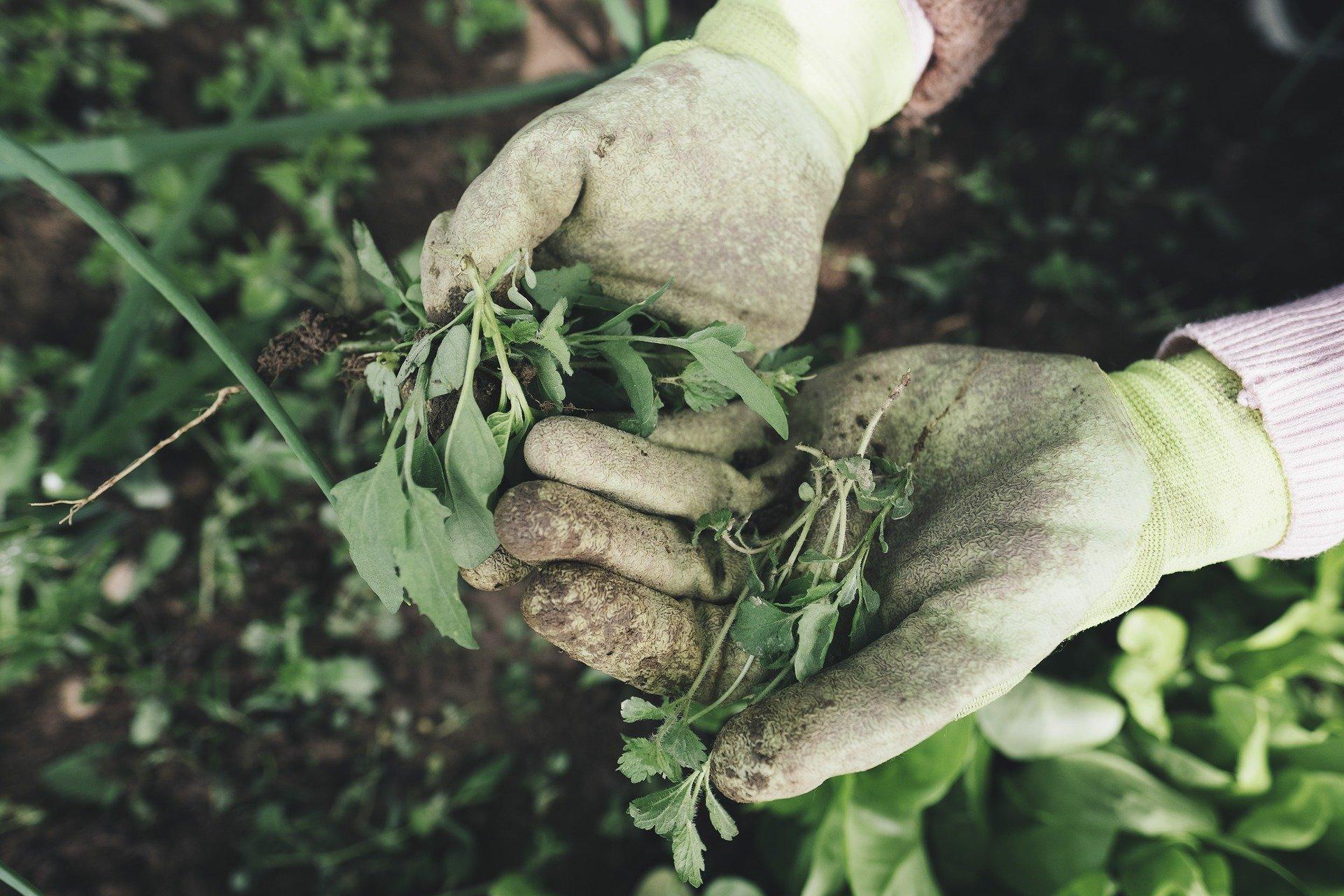 Смогут ли малые фермы спасти мир?